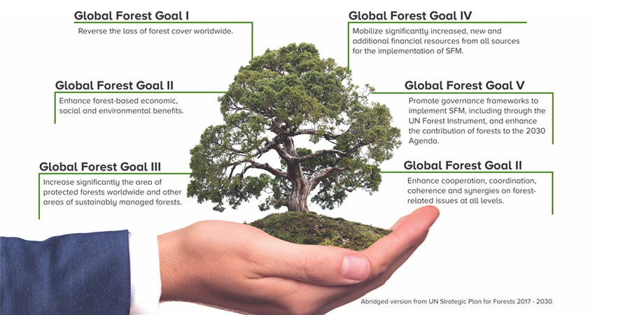 Global-forest-goal